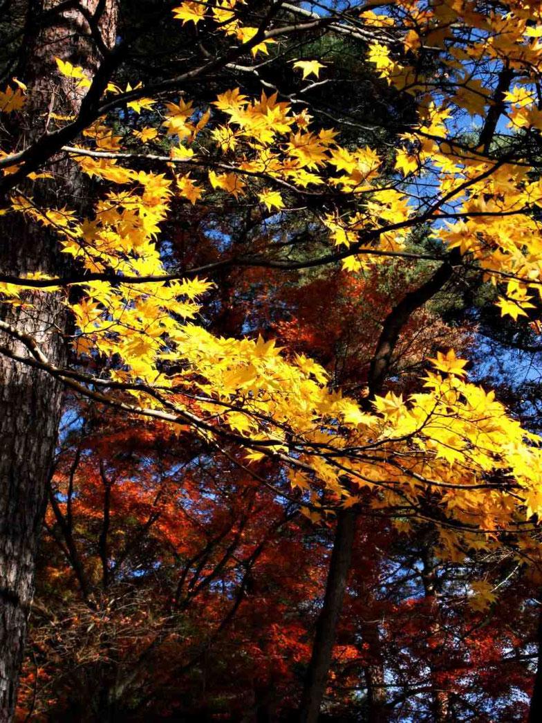 紅葉の時期には、色とりどりの紅葉を見ることができます。