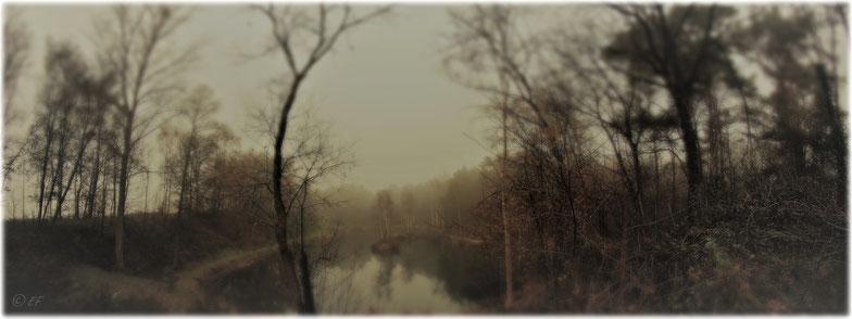 Der im Nebel getauchte Anglerteich