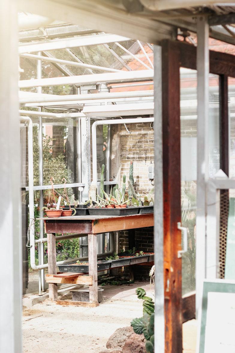 Heizmatten zur Anzucht von Pflanzen - Eine Heizmatte mit einfachem Stecker beheizt deine Zimmerpflanzen sobald sie an den Strom gesteckt wird durchgängig mit zirka 35°C. Deine Pflanzen erhalten mit Heizmatten diesen Typs immer eine konstante Temperatur.