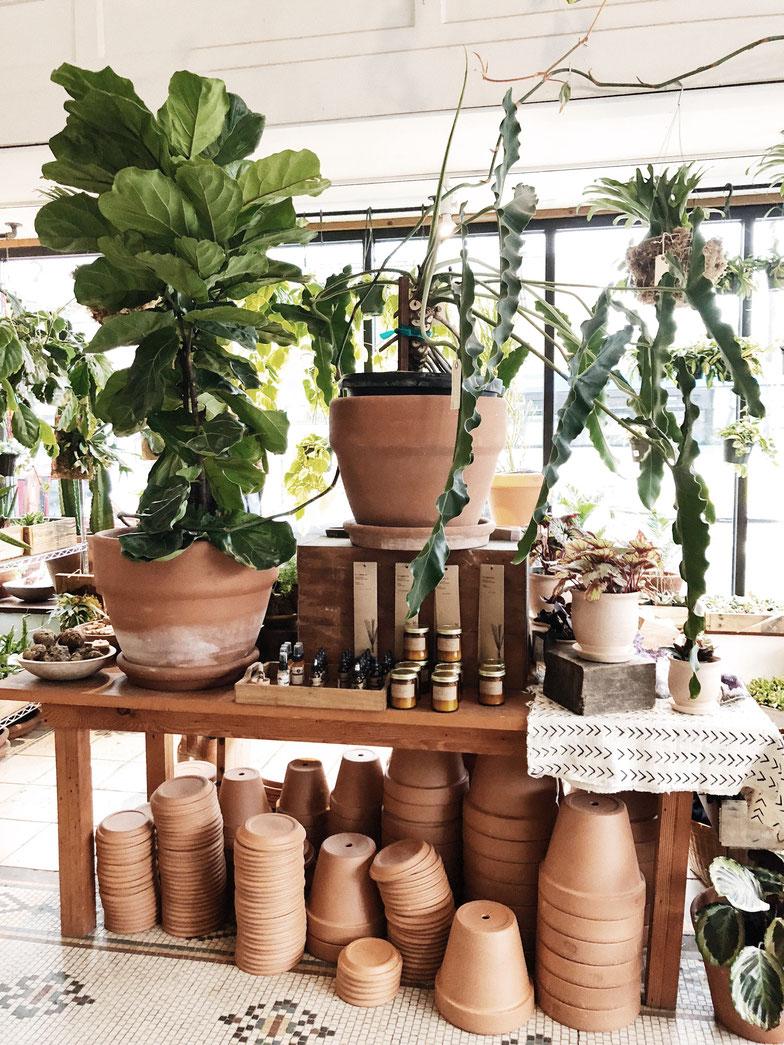 Heizmatten zur Anzucht von Pflanzen - Heizmatten kannst du sowohl in einem kleinen Gewächshaus nutzen oder aber einfach die Gläser und Töpfe deiner Jungpflanzen auf die Heizmatte stellen.