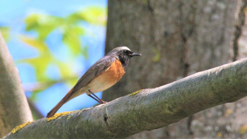 Vögel im Augustenbühl