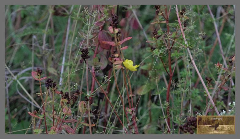 Herbstliches Wiesen Potpourri