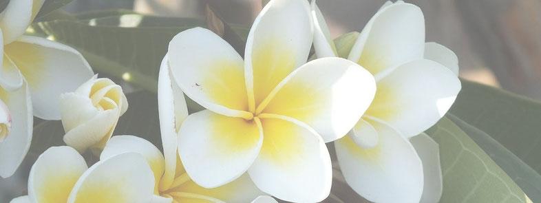 ハワイアン ロミロミ ルアナ