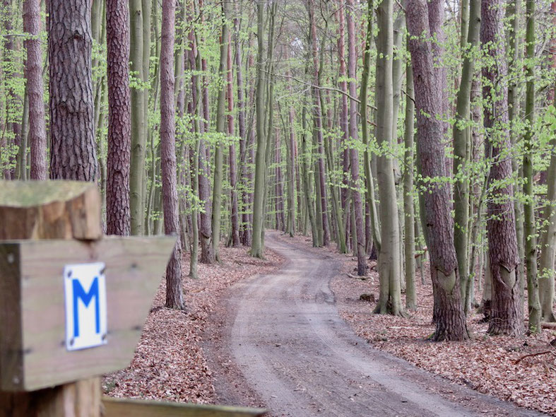 Müritz-Nationalpark, Wanderweg, Müritz-Rundwanderweg, Urlaub, Wandern mit Hund