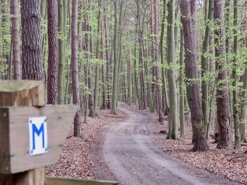 Müritz-Nationalpark, Wanderwege, Müritz-Rundwanderweg