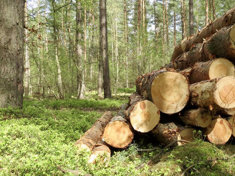 Holzstapel im Müritz-Nationalpark, Wald Zwenzow