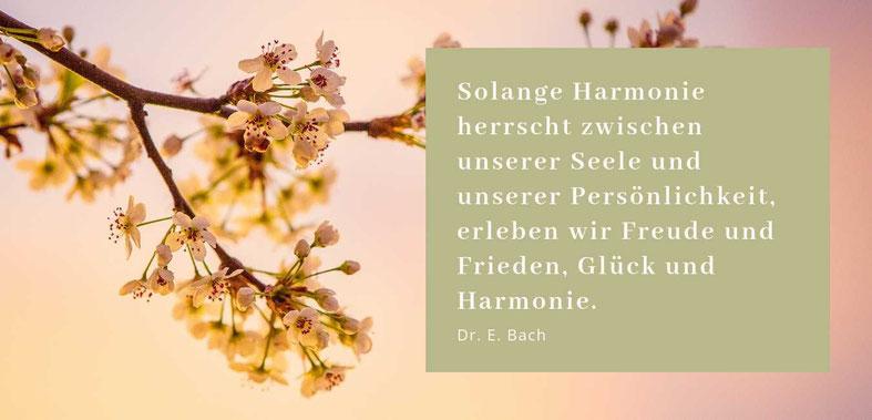 Lieber glücklich mit Bachblüten Ordnung ins System bringen Karin Ranftl Gastbeitrag Blogparade Lebensberatung Berlin