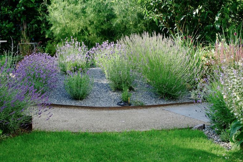 dieartigeGARTEN // July Garden - mixed Lavender Hill