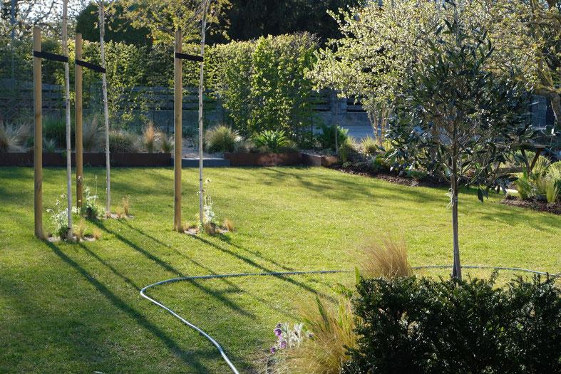 dieartigeGARTEN // April, Frühlingsgarten - Birkenwäldchen+Olivenbäumchen+Buchenhecke