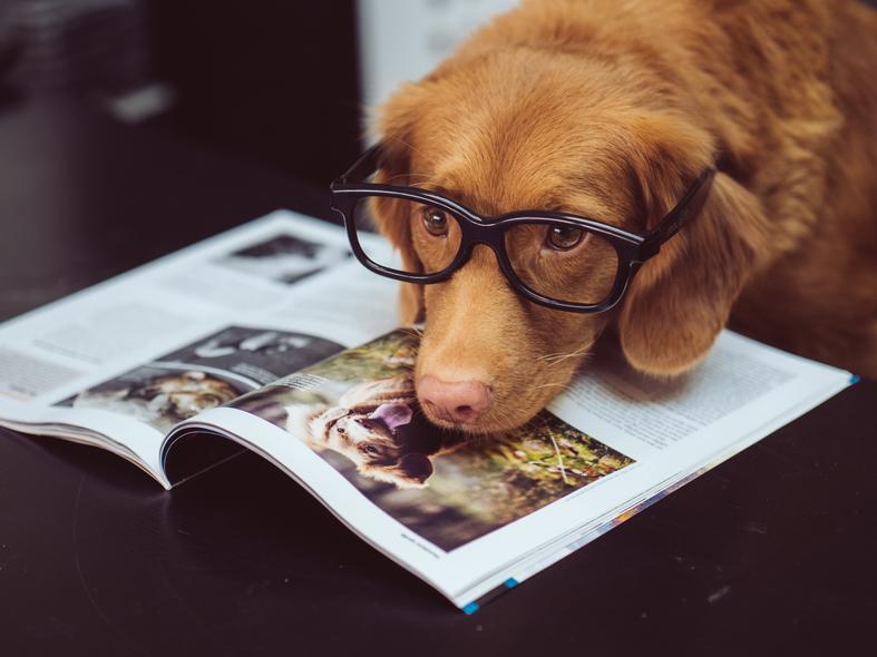 Hundeführerschein bei DER LILA HUND