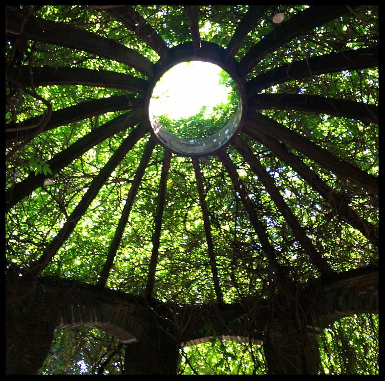 tree arbor day