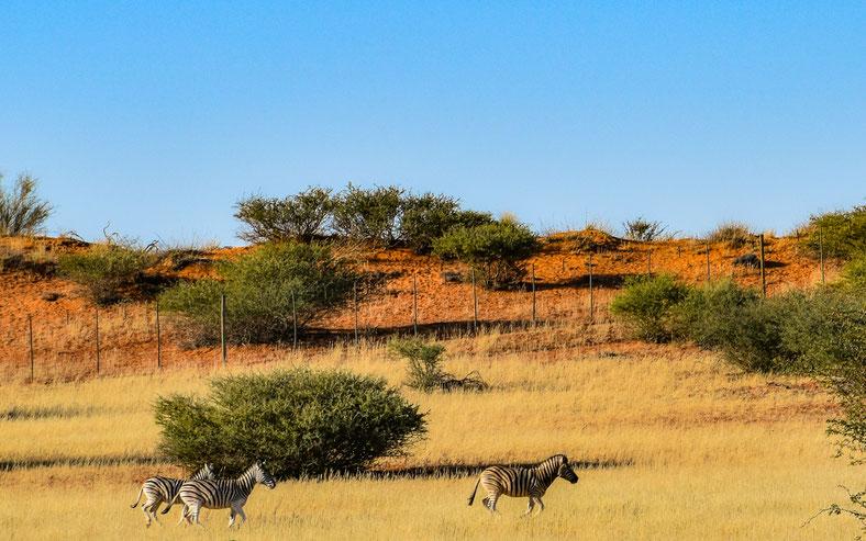 I colori del Deserto del Kalahari