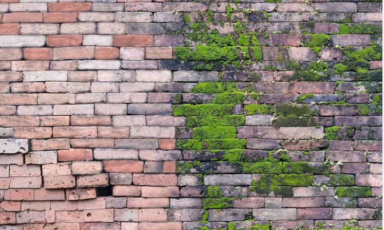 Gereinigte Fassade, mit Moos befallen, Wirkungsweise von GreenEx