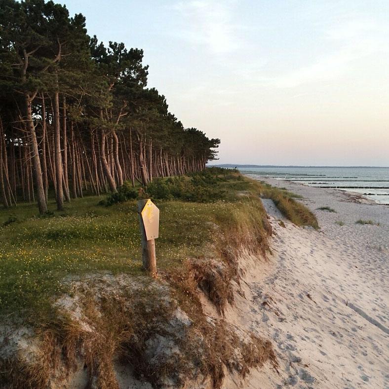 Christine Grandt: Hiddensee, Gellen, Kiefern, Wald, Strand, Sonnenuntergang, Insel