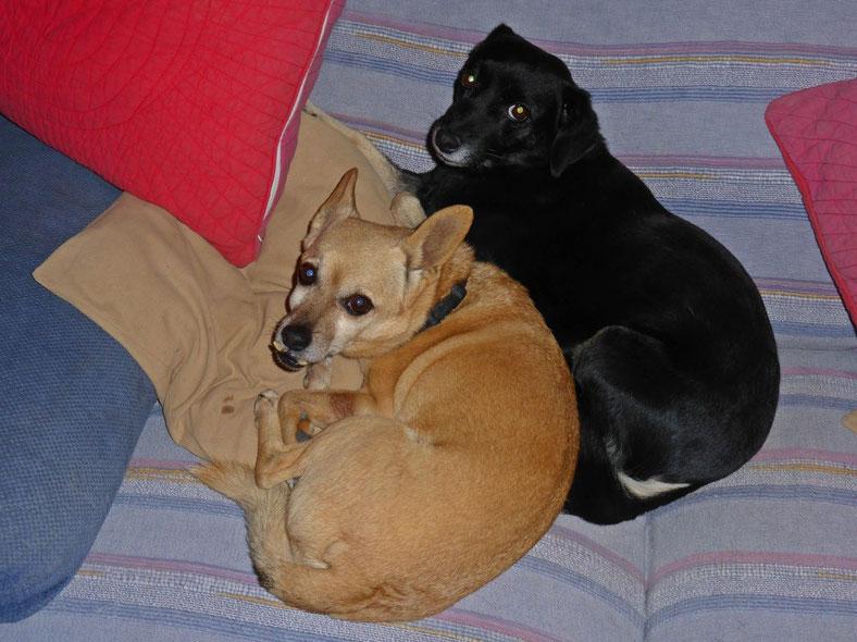 Munchy and Leila