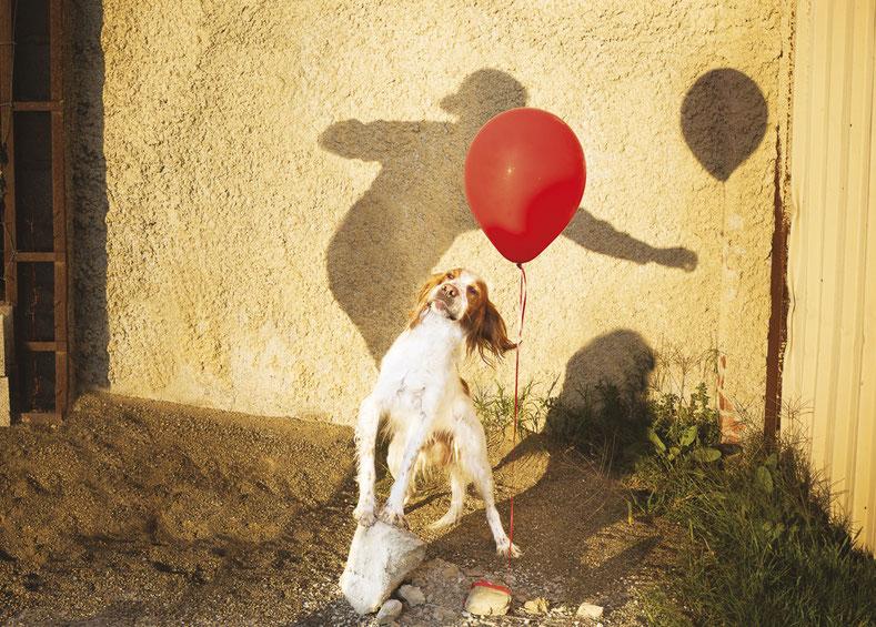 spiaggia-sabbia-cane-palloncino-rosso-ombra-uomo-canile