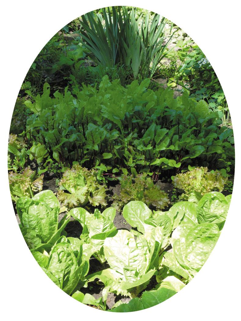Foto bestellte Gemüsebeete © Winfried Haas