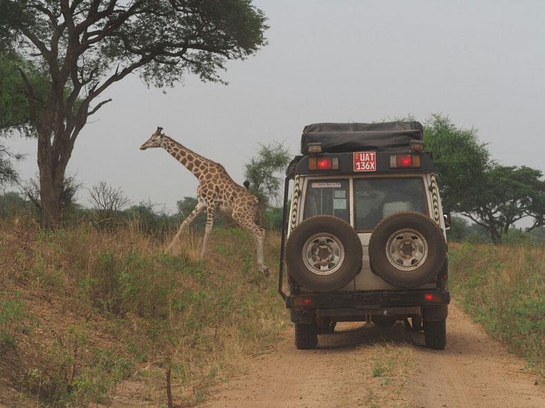 Begegnungen in den ugandischen Nationalparks