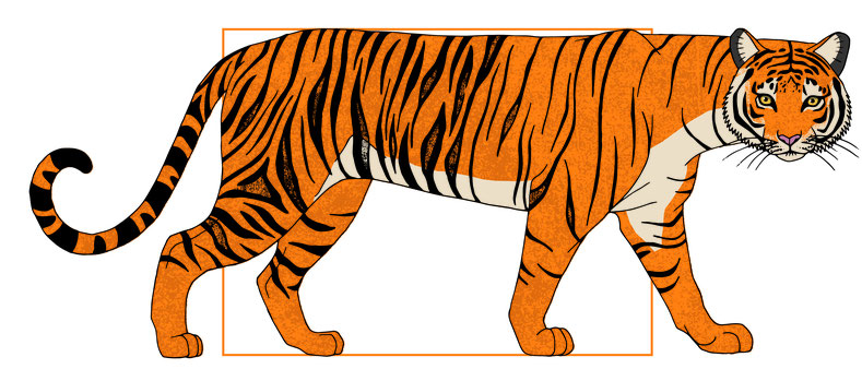 design illustration melanie suter tiger digital anatomie biologie natur textur