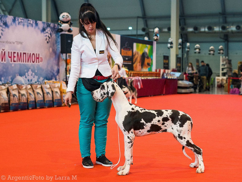 Bigfort CHEGIRA ARMAND (6m) cl. puppies - v/p, CW! 08.01-2020 Ekaterinburg NDS