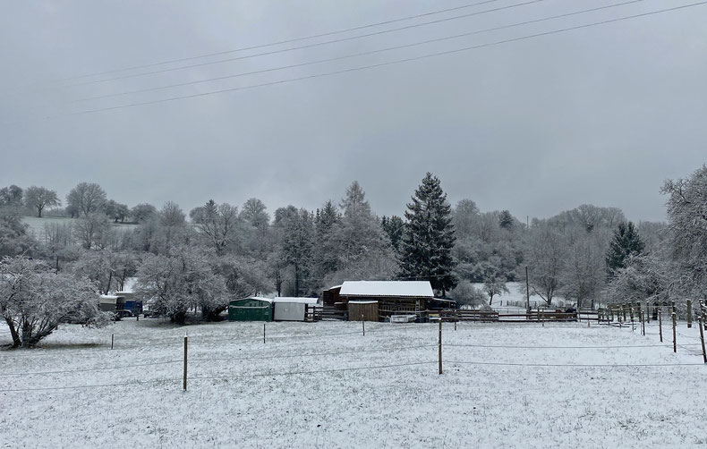 03.01.2021: Juhu! Der erste Schnee!!!