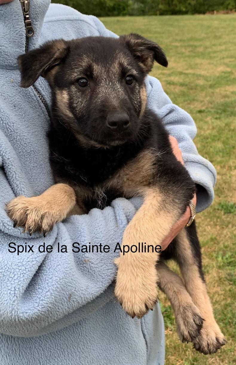 Spix de la Sainte Apolline