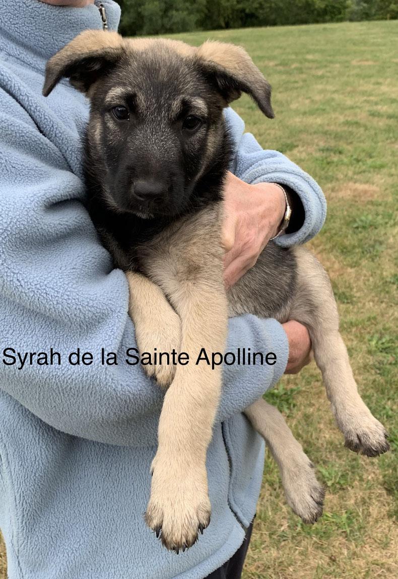 Syrah de la Sainte Apolline
