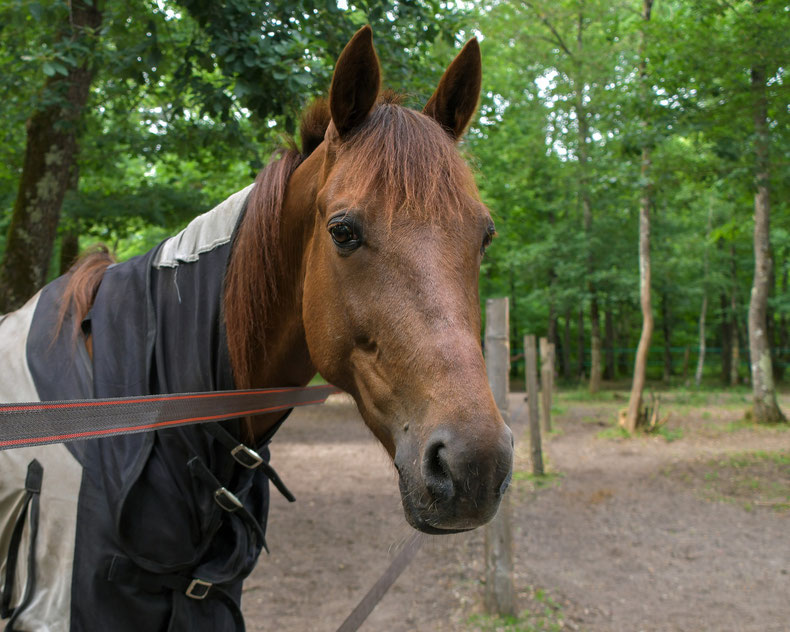 Pferd mit Decke für Sommerekzemer