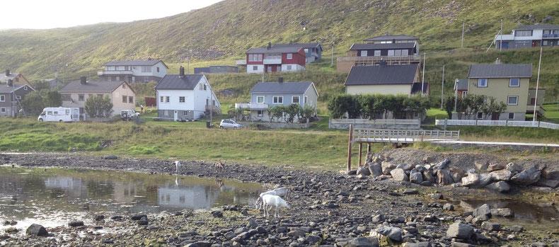 rennes en Norvège