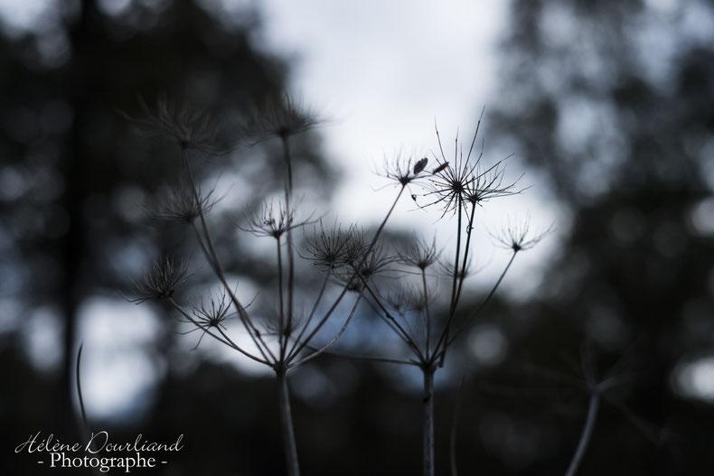 photo de nature en vallée de chevreuse