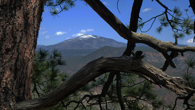 Redondo Peak from Joan Delaplane Trail, Jemez Mountains, Santa Fe National Forest, New Mexico