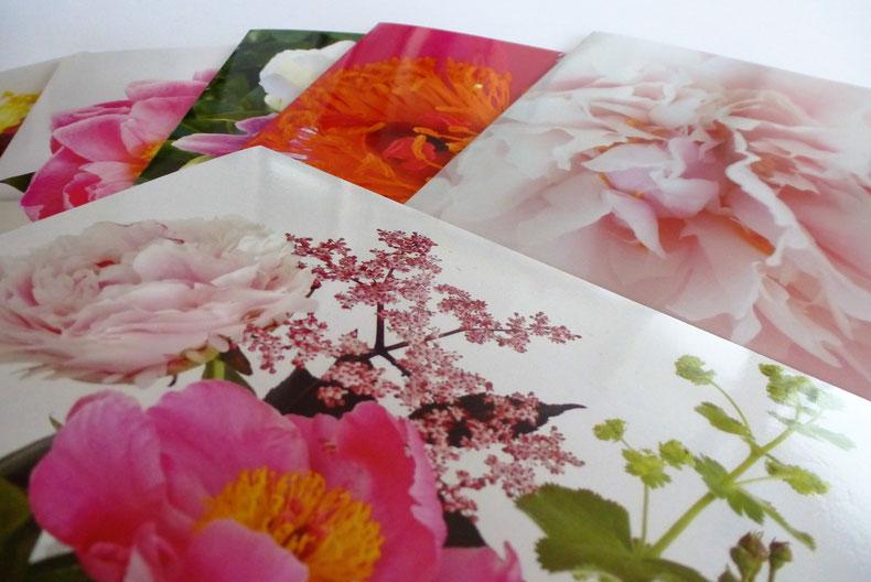 Postkarten Naturfotografie florale Motive Tübingen Reutlingen
