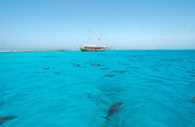 Egypte - Dolphin Reef