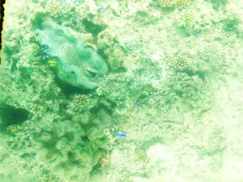 沖縄石垣島のドレスじゃないリゾートコスプレキャバクラ[CAMP META-CAT] 色。/ゆうあ