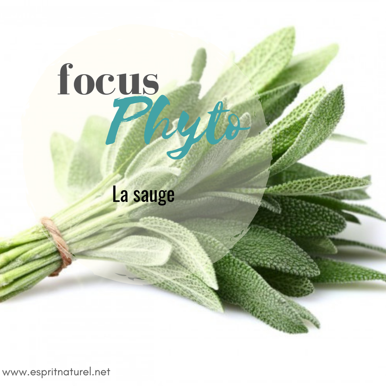 Jardin Masculin Ou Feminin: Focus Phyto: La Sauge, Plante Sacrée Du Féminin