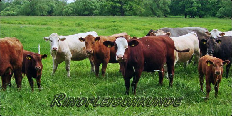 Mein BioRind | Rindfleischkunde