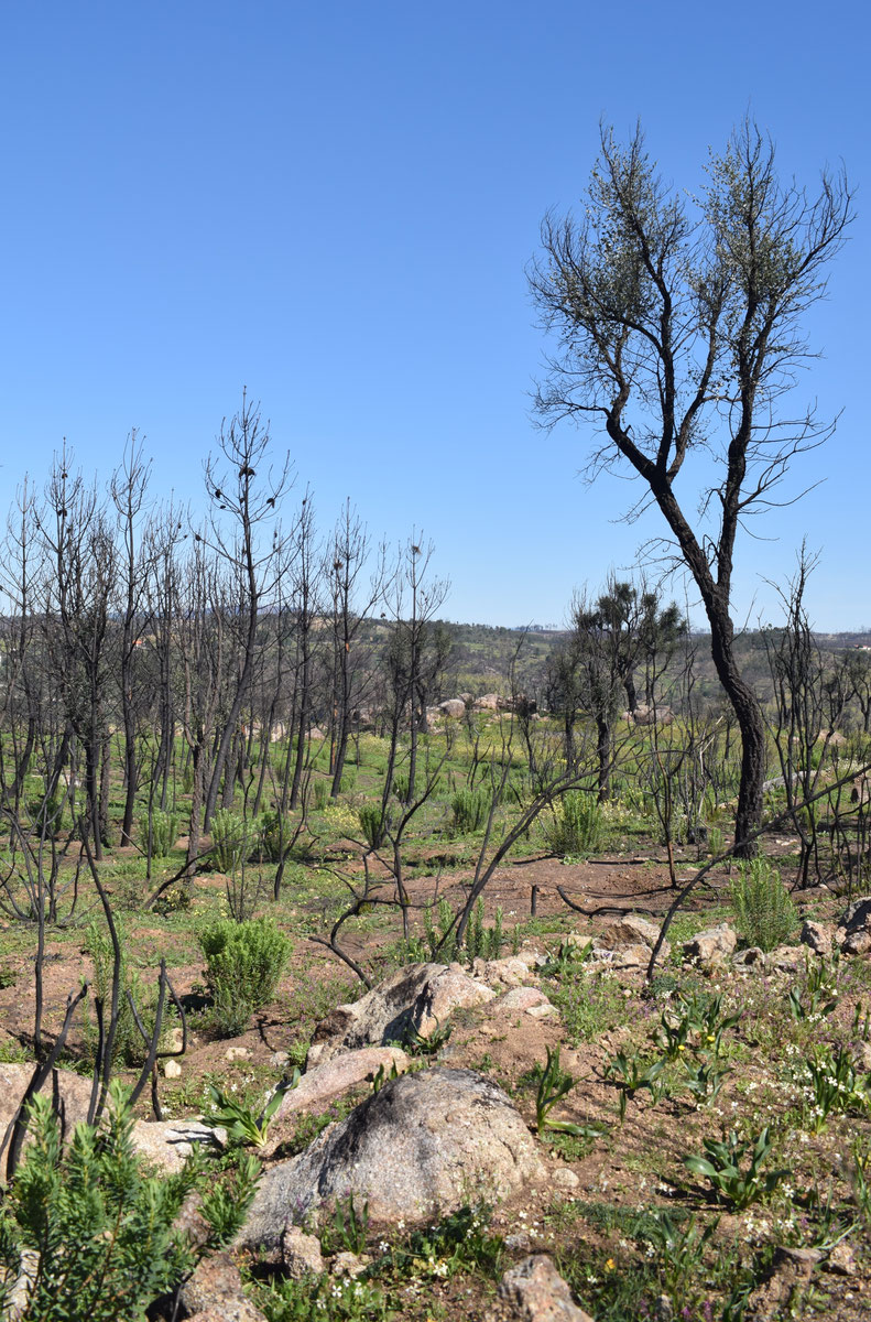 fire damage in Portugal, Gavião and Belver