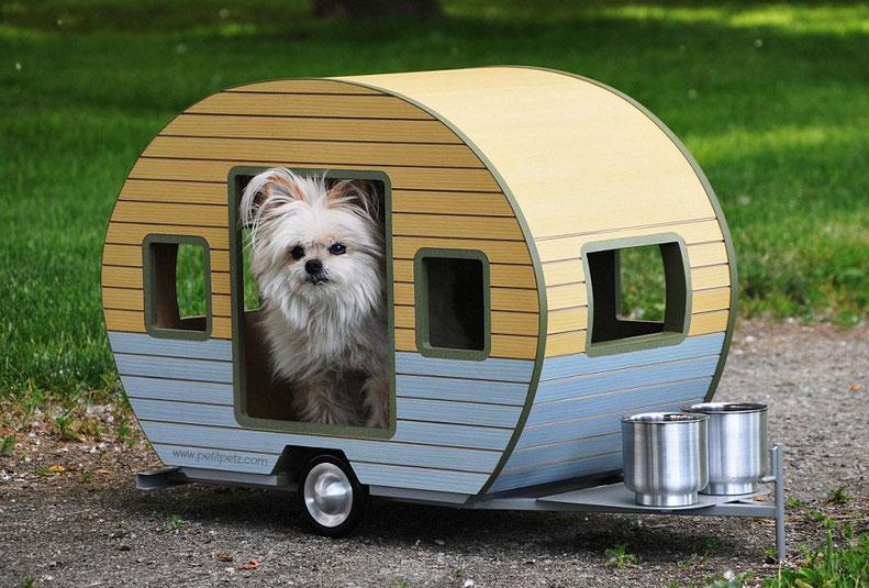 acampar con perros pequeños chihuahua yorkshire terrier pomeranias cachorritos