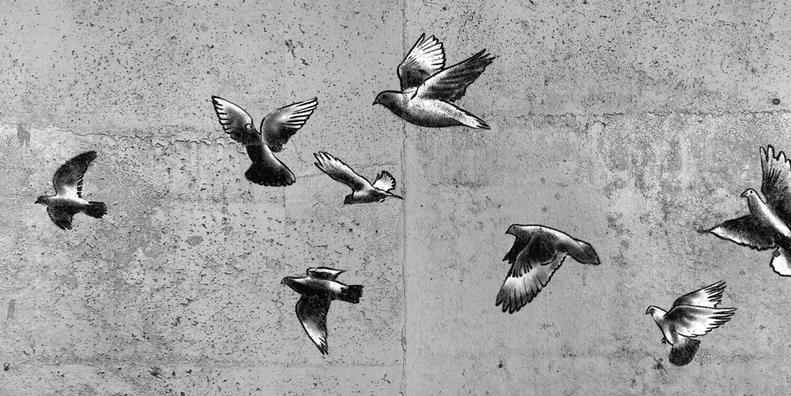 graffiti - fliegende tauben
