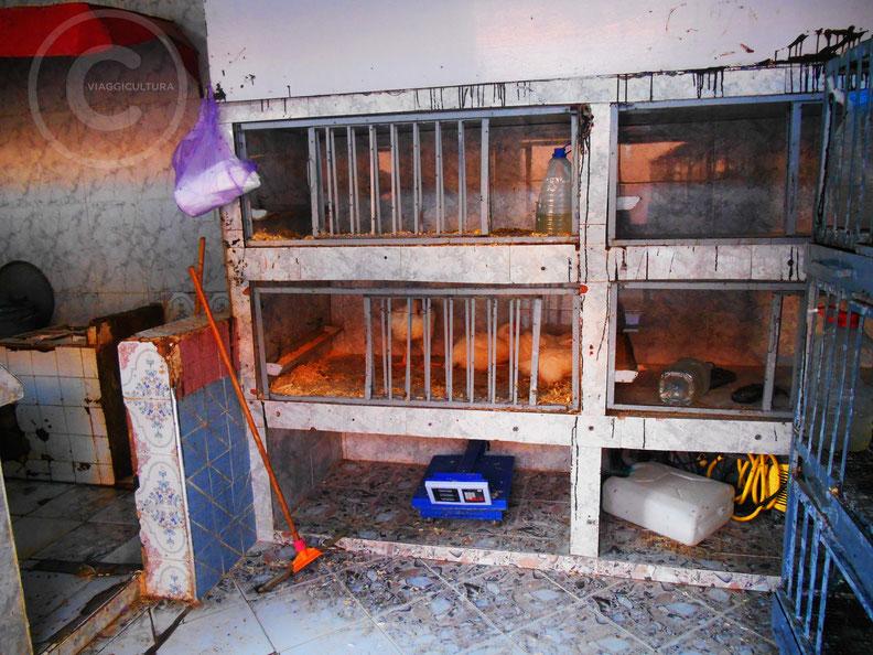 Il negozio dei polli, Bouarfa