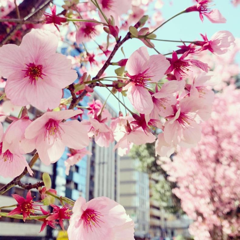京都市下京区四条烏丸の心療内科、女医のいるメンタルクリニック、桜