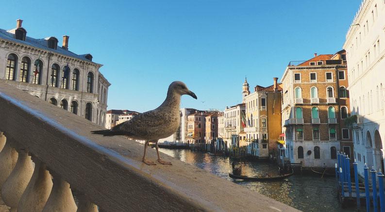 BIGOUSTEPPES VENISE PONT MOUETTE CANAL ITALIE