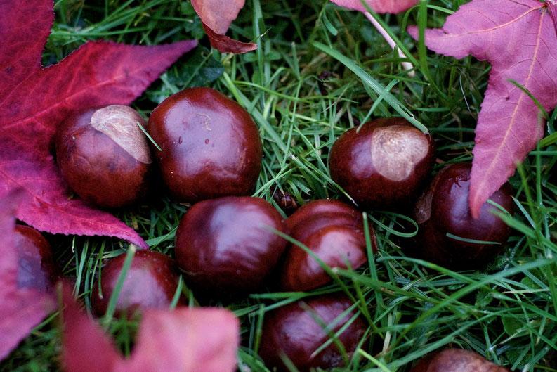 Zeichen des Herbst
