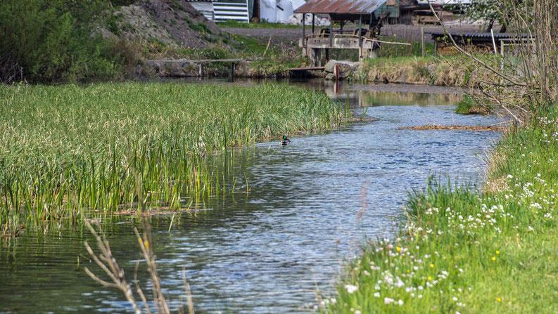 Ausfluss Mettlenbach
