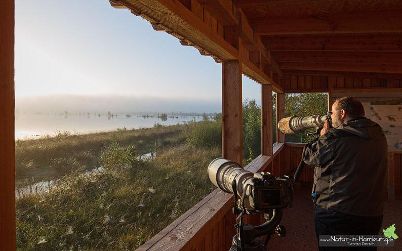 Blick aus dem barrierefreien Beobachtungsstand. Die vielen Kraniche ziehen ebenso wie die fantastischen Lichtstimmungen im Moor zahlreiche Naturfotografen an.