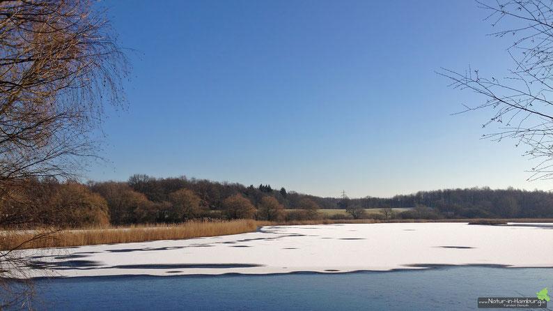 Ausgedehnte Schilfbereiche wie hier am Öjendorfer See bilden das Biotop der Rohrdommel