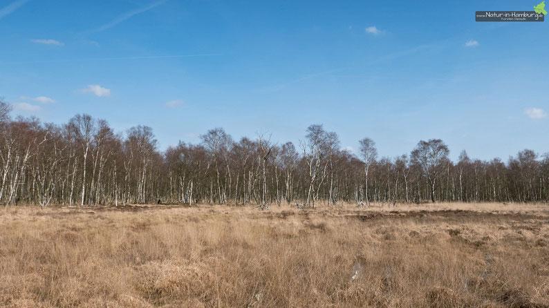 Landschaftsimpression aus dem Duvenstedter Brook