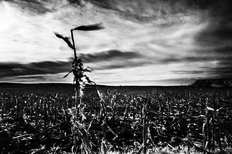 Sur la route © Michael Bennoun