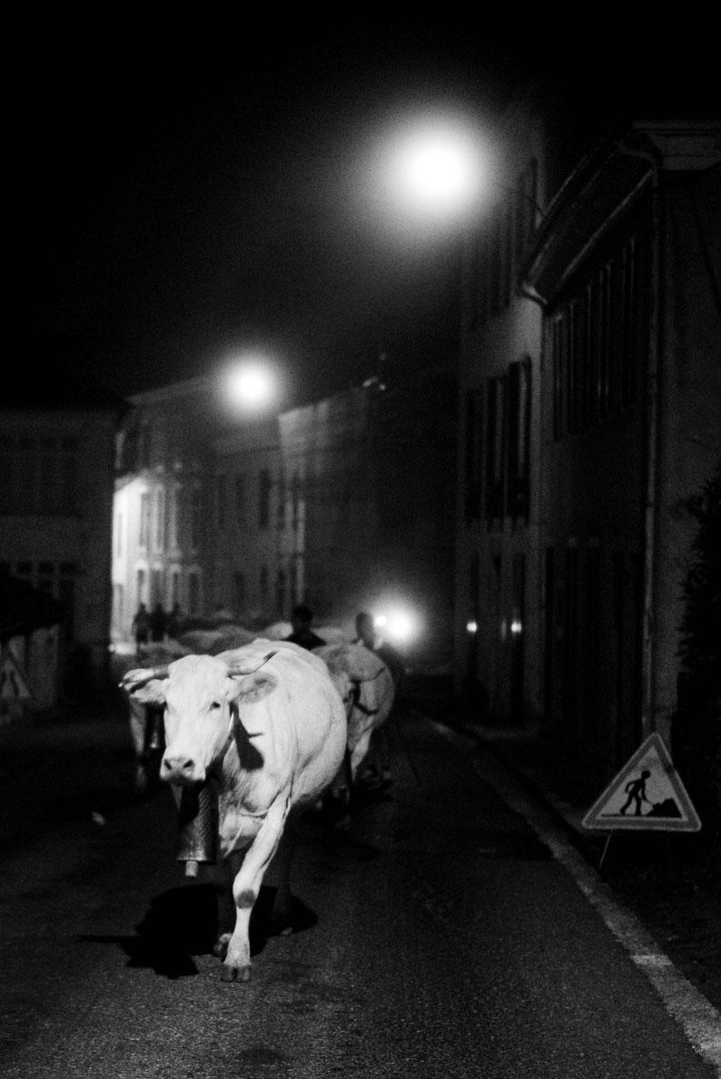 Transhumance de nuit © Laurent Ferrière