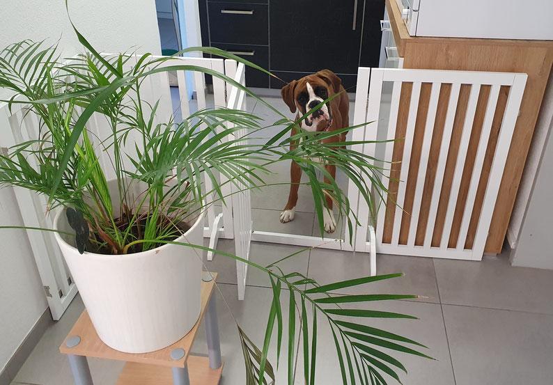 Roma  Praxisassistentin  Teilzeits-Empfangsdame  Wachhund
